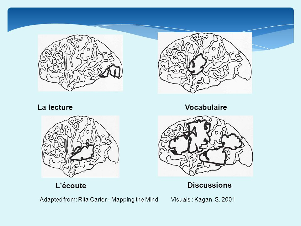 Adapted from: Rita Carter - Mapping the Mind Visuals : Kagan, S. 2001 La lectureVocabulaire Lécoute Discussions