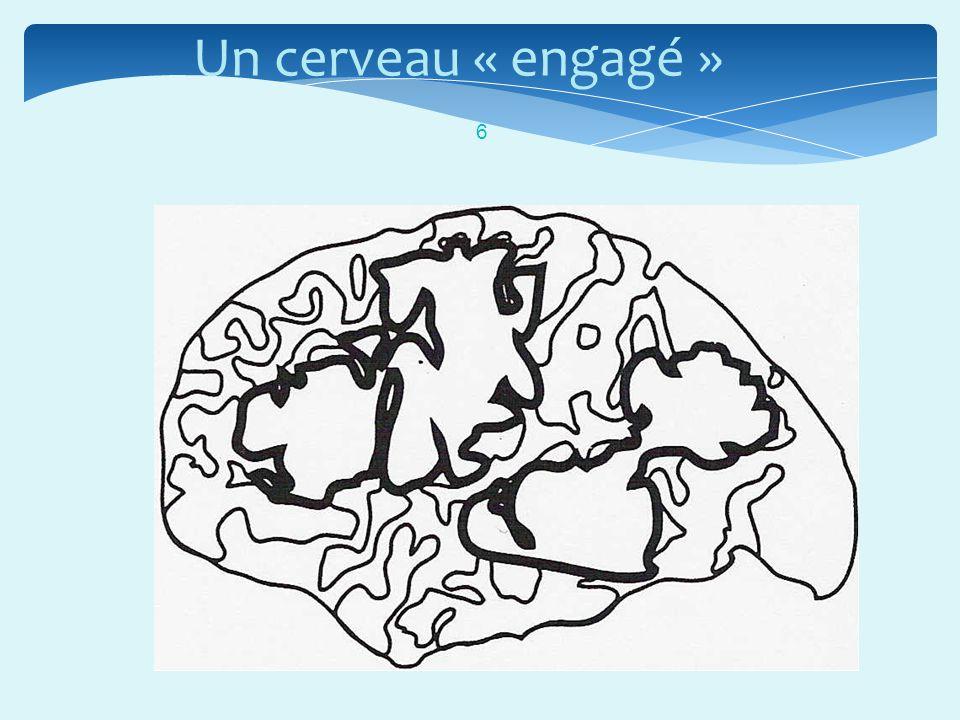 « Le cerveau est fondamentalement social et collaboratif.