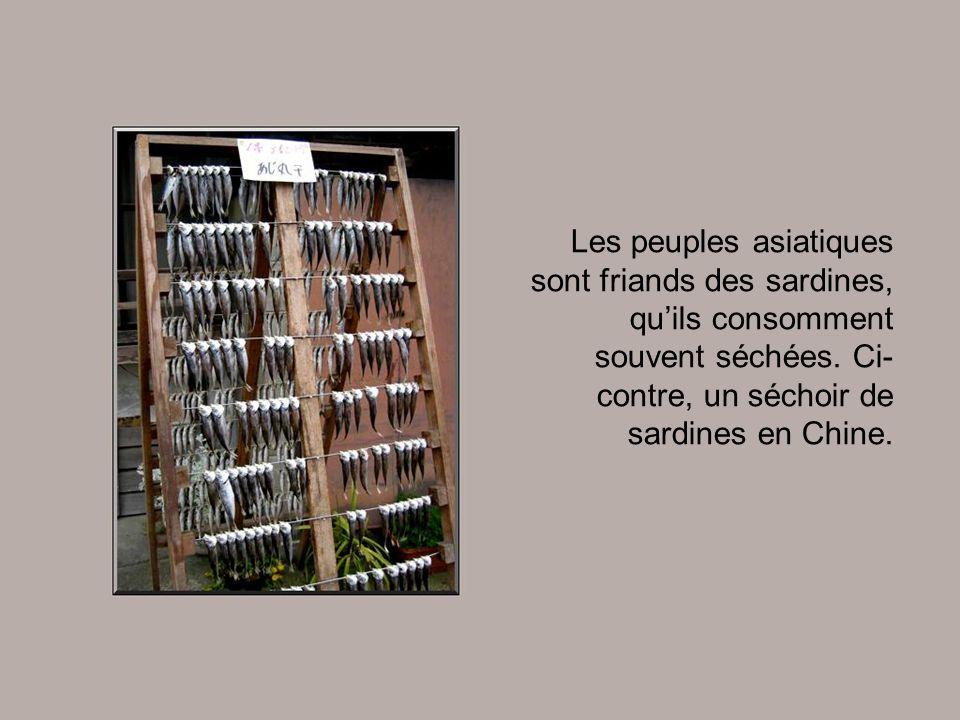Malgré sa réputation de poisson gras, la sardine est conseillée pour tous. C'est le seul aliment en conserve qui peut être consommé sans modération pa