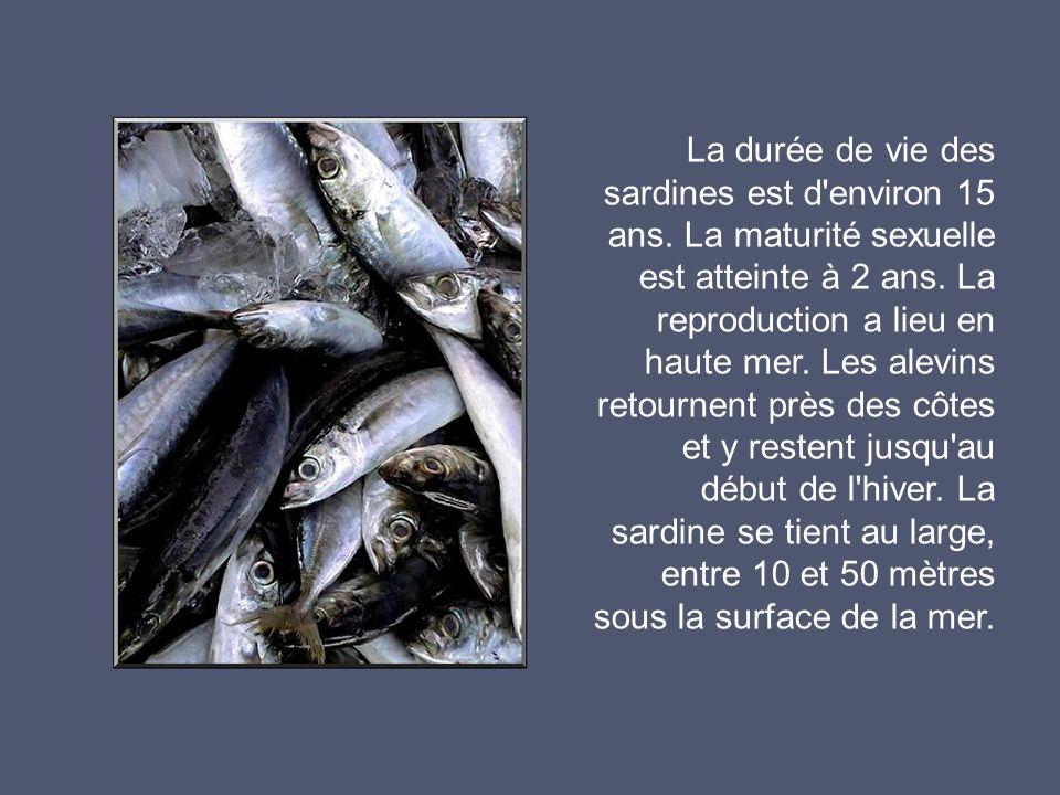 Au delà de ces aspects scientifiques, la sardine est un régal pour les gourmets, surtout lorsquelle est préparée dans le respect de l art culinaire traditionnel, avec des huiles de qualité et des aromates.
