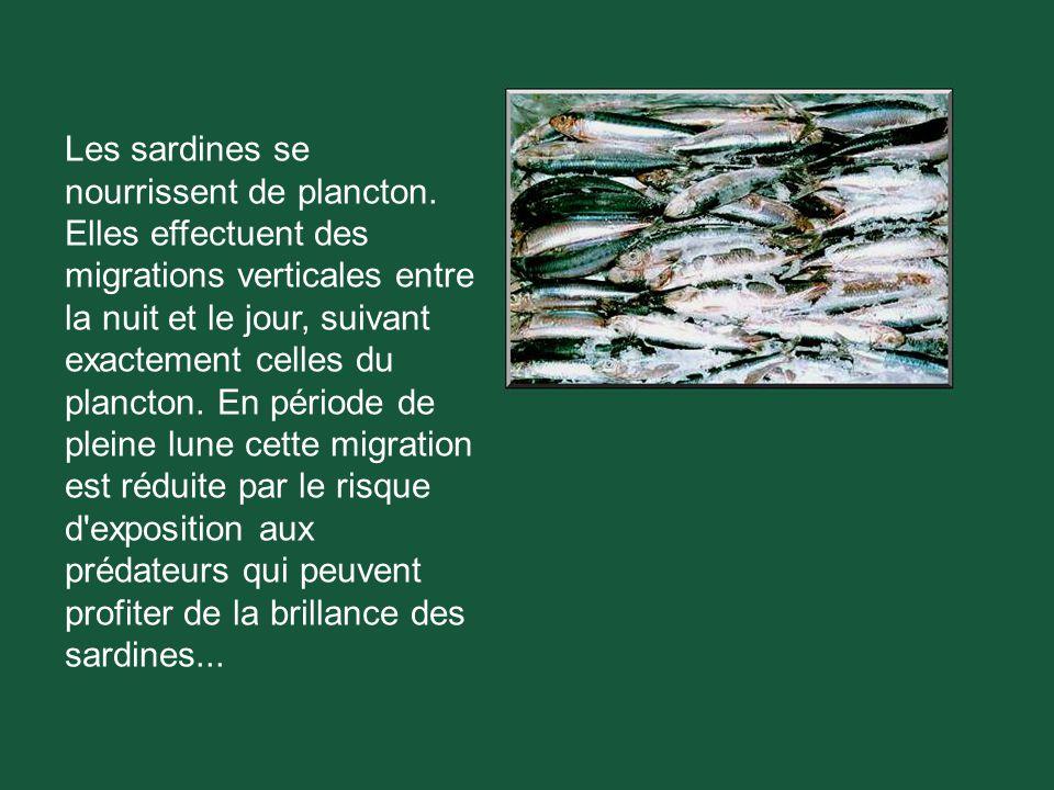 La durée de vie des sardines est d environ 15 ans.