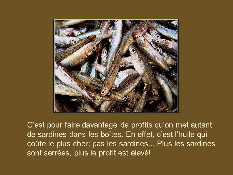 Cest pour faire davantage de profits quon met autant de sardines dans les boîtes.