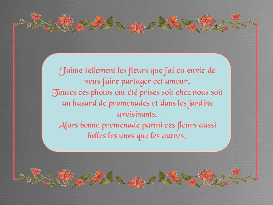 Jaime tellement les fleurs que jai eu envie de vous faire partager cet amour.