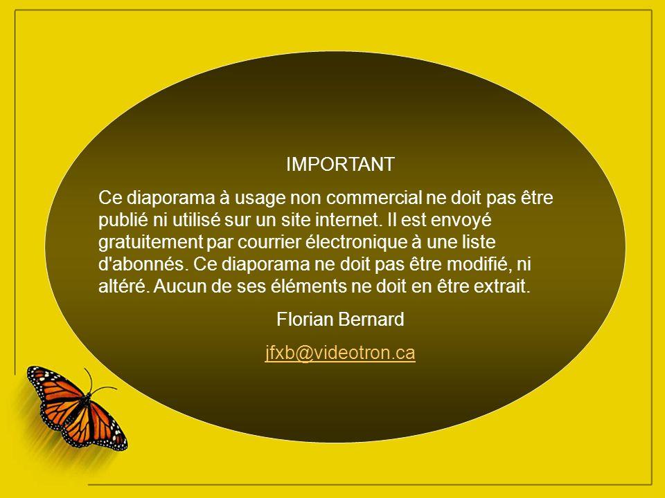 Photographie – Ronnie Gaubert Limelight - Mantovani Orchestra Création Florian Bernard Tous droits réservés – 2005 jfxb@videotron.ca