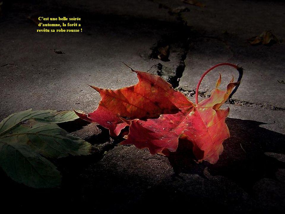 Création de zoupinette2@yahoo.fr Texte et images du Web Musique de Sound of Inkas