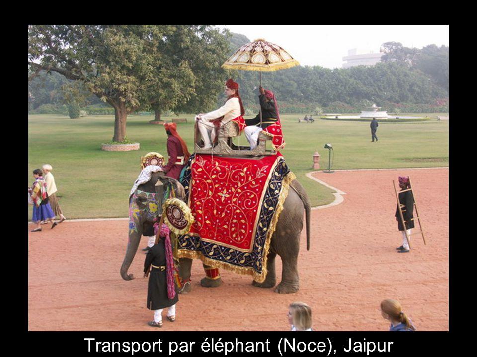 4 Transport par éléphant (Noce), Jaipur