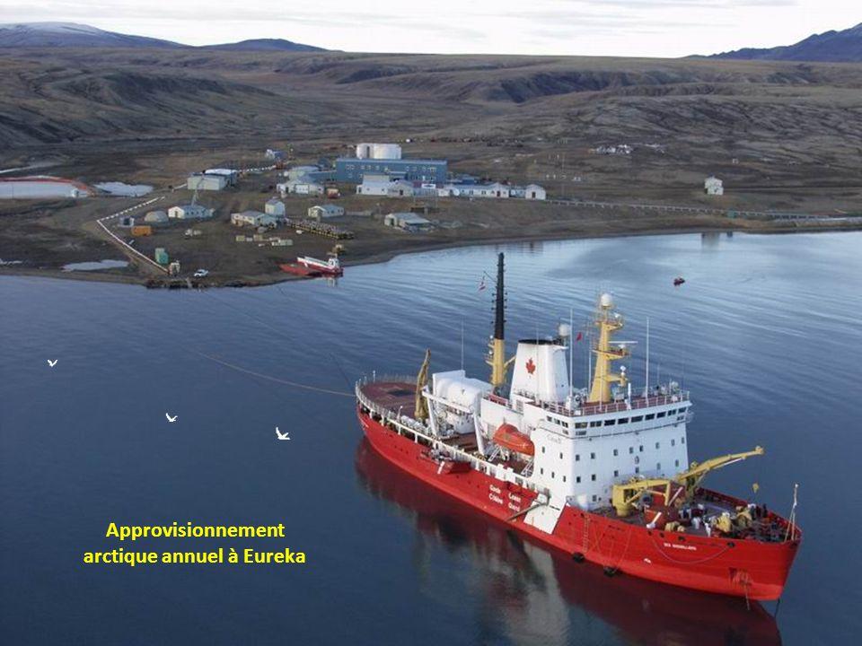 La baleine Béluga est abondante au Nunavut