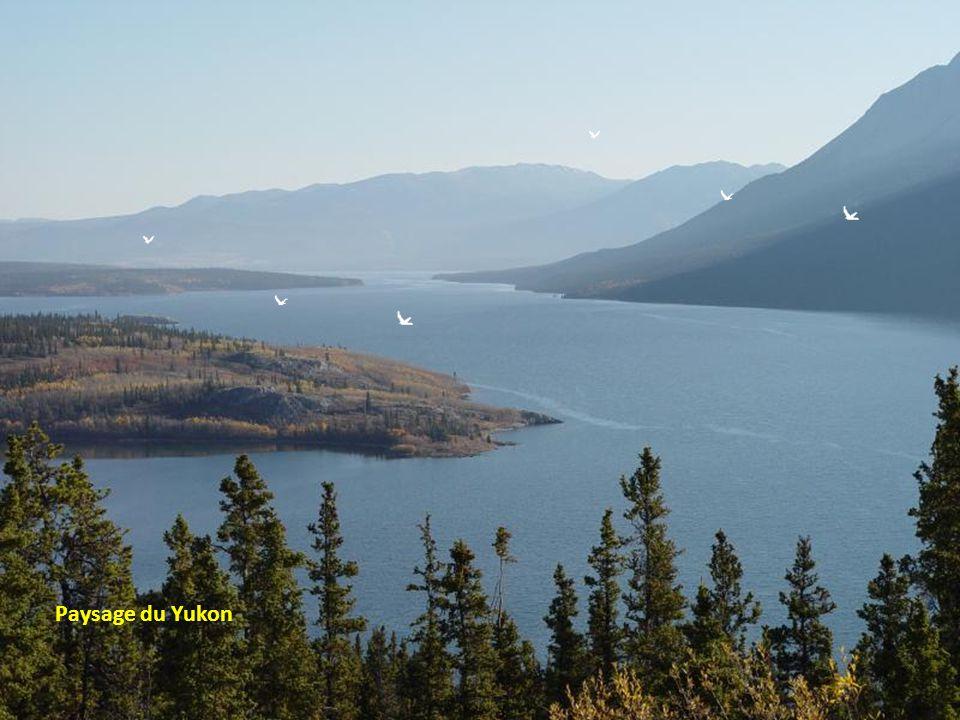 Rivière Yukon