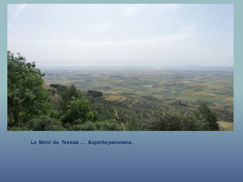 La route qui mène Vers le Mont Tessala. Mont du tessala