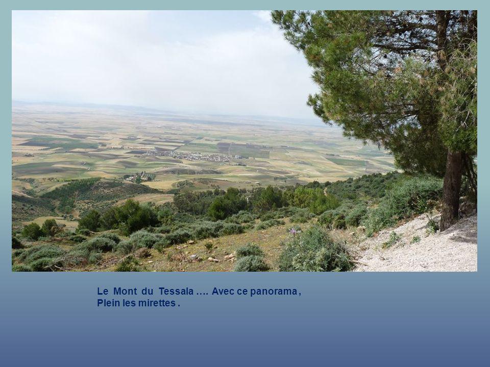 Le Mont du Tessala …. Superbe panorama.