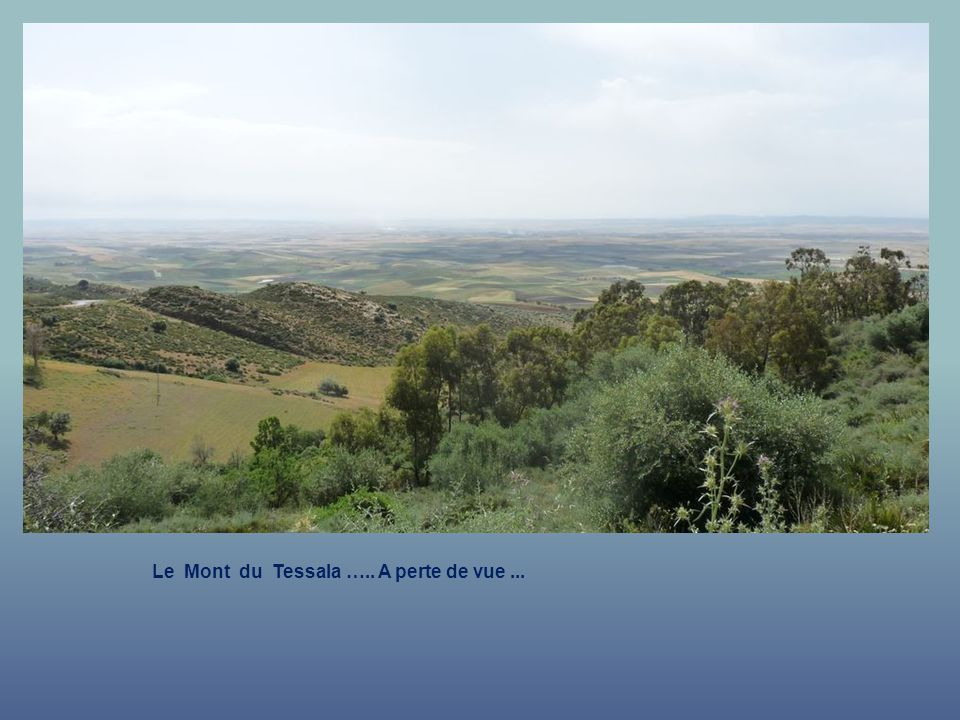 Le Mont du Tessala ….. Autre point de vue.