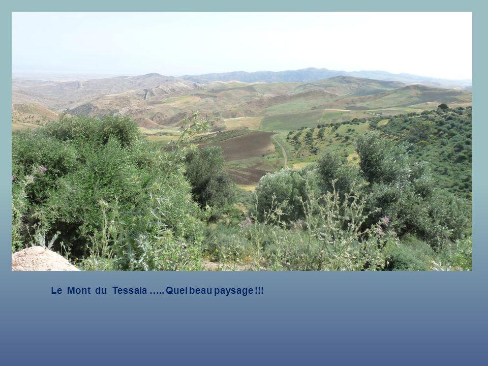 Le Mont du Tessala ….. A perte de vue...