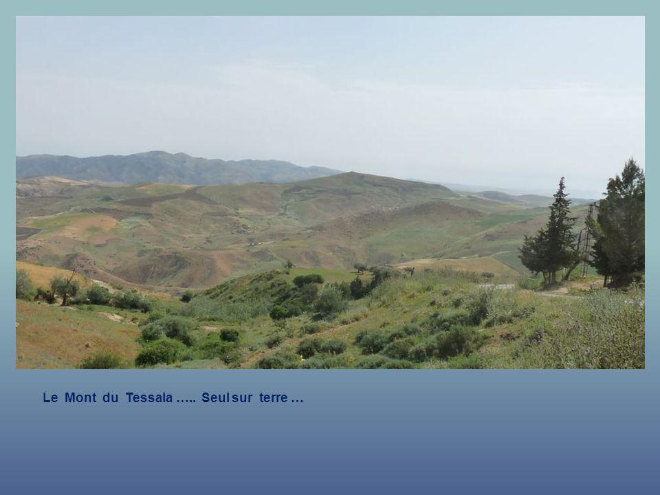 Le Mont du Tessala ….. Une Vue à vous faire Rêver.