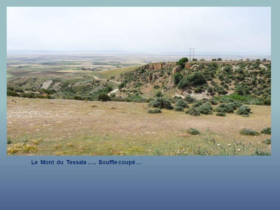 Le Mont du Tessala ….. Seul sur terre …