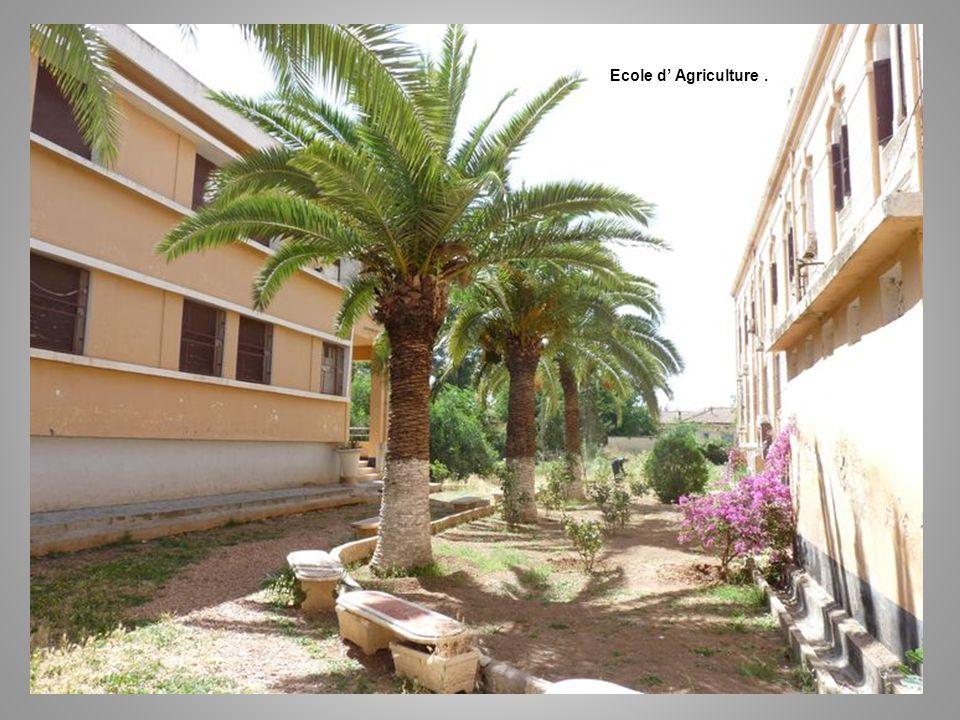 Ecole d Agriculture.