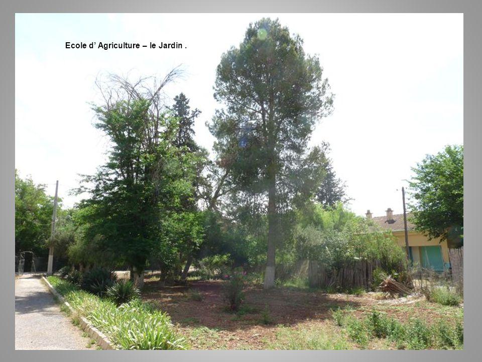 Ecole d Agriculture – le Jardin.