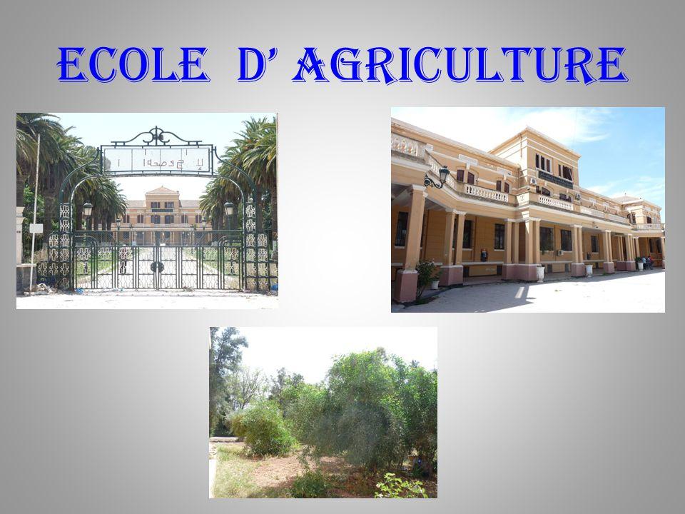 Sidi-bel-abbes Voyage dans Notre Beau Pays : Du 19 au 26 Mai 2009. Annie & François … 5 ème Partie : Ecole dAgriculture. Lac Bénali. Les Alentours de