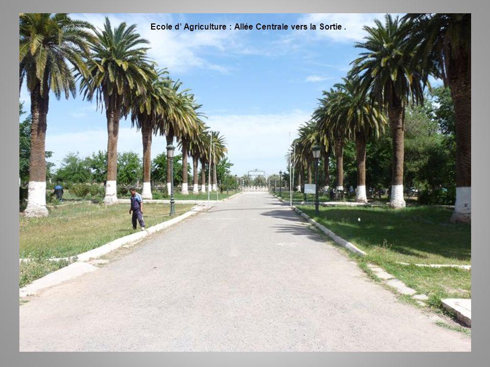Ecole d Agriculture – Allée Centrale …. Vers la Sortie.
