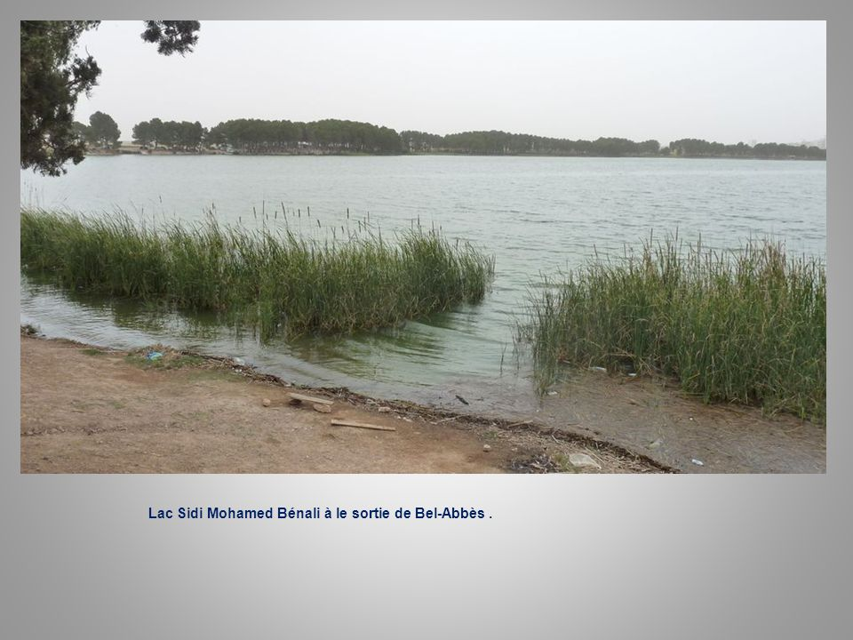 Lac s.M. benali