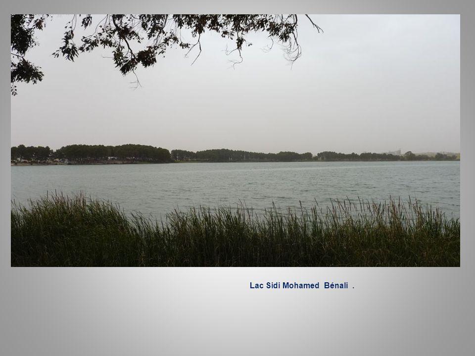 Lac Sidi Mohamed Bénali à le sortie de Bel-Abbès.