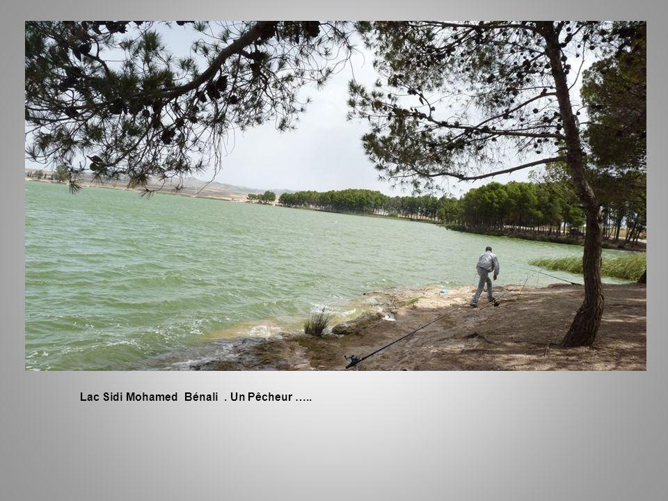 Lac Sidi Mohamed Bénali.