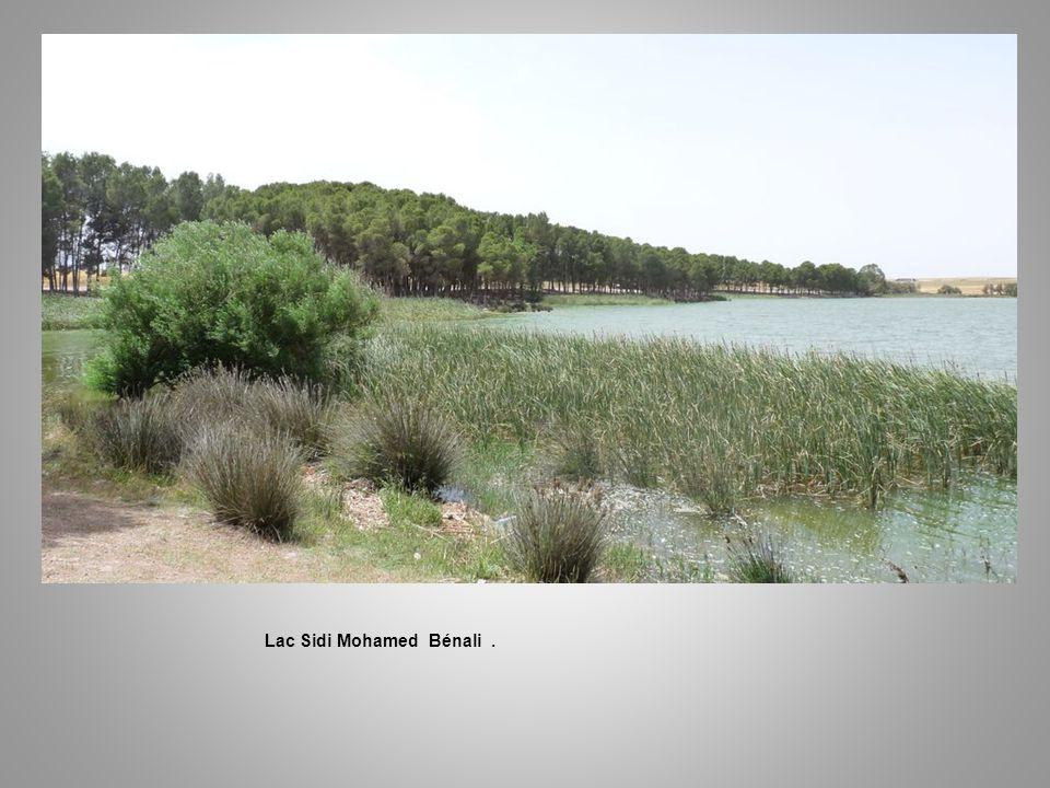 Lac Sidi Mohamed Bénali. Un Pêcheur …..