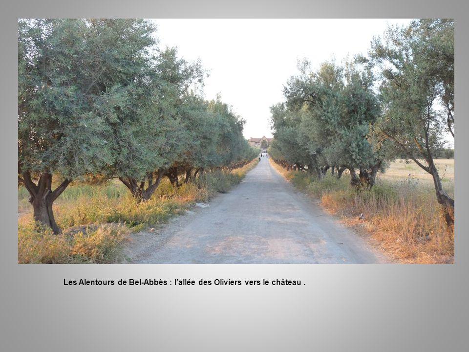 Les Alentours de Bel-Abbès : la Briqueterie.
