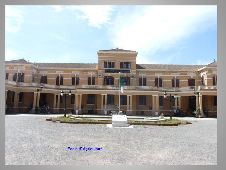 Ecole d Agriculture – Allée Centrale.