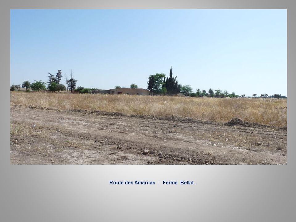 Route des Amarnas : Ferme Martinez.