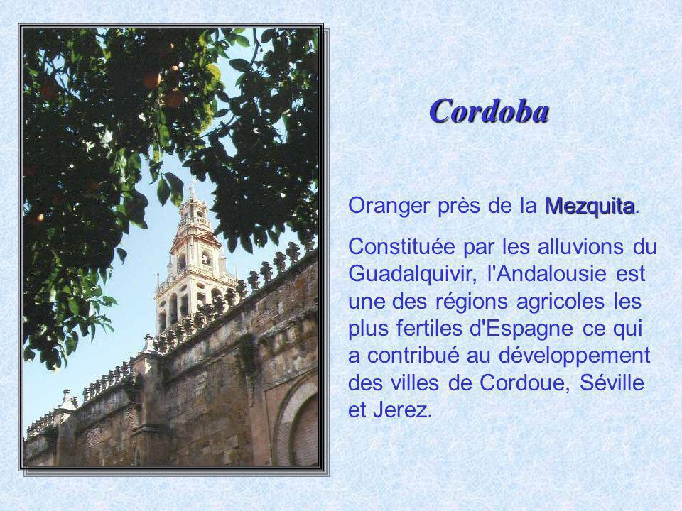 La cathédrale La cathédrale de style plateresque a été édifiée au centre de la mosquée venant altérer le sens et la perspective de cette colonnade et