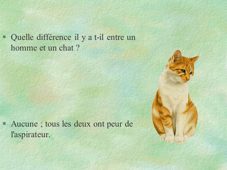 §Quelle différence il y a t-il entre un homme et un chat ? §Aucune ; tous les deux ont peur de l'aspirateur.