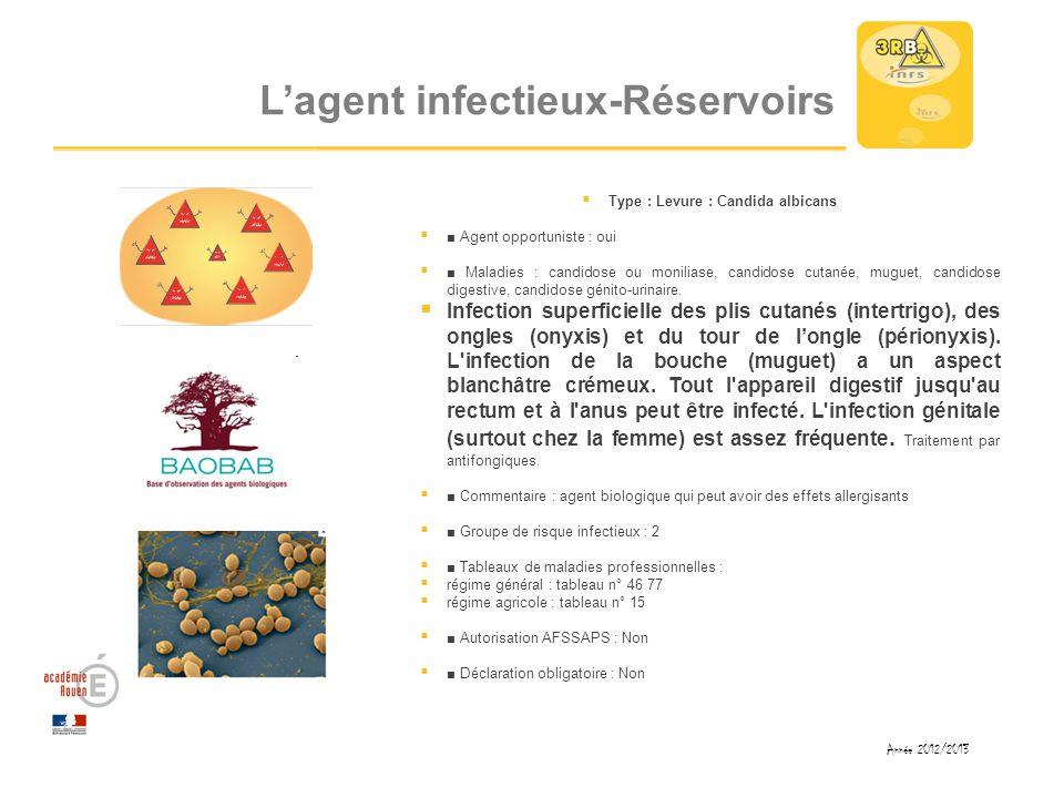 Lagent infectieux-Réservoirs Type : Levure : Candida albicans Agent opportuniste : oui Maladies : candidose ou moniliase, candidose cutanée, muguet, c