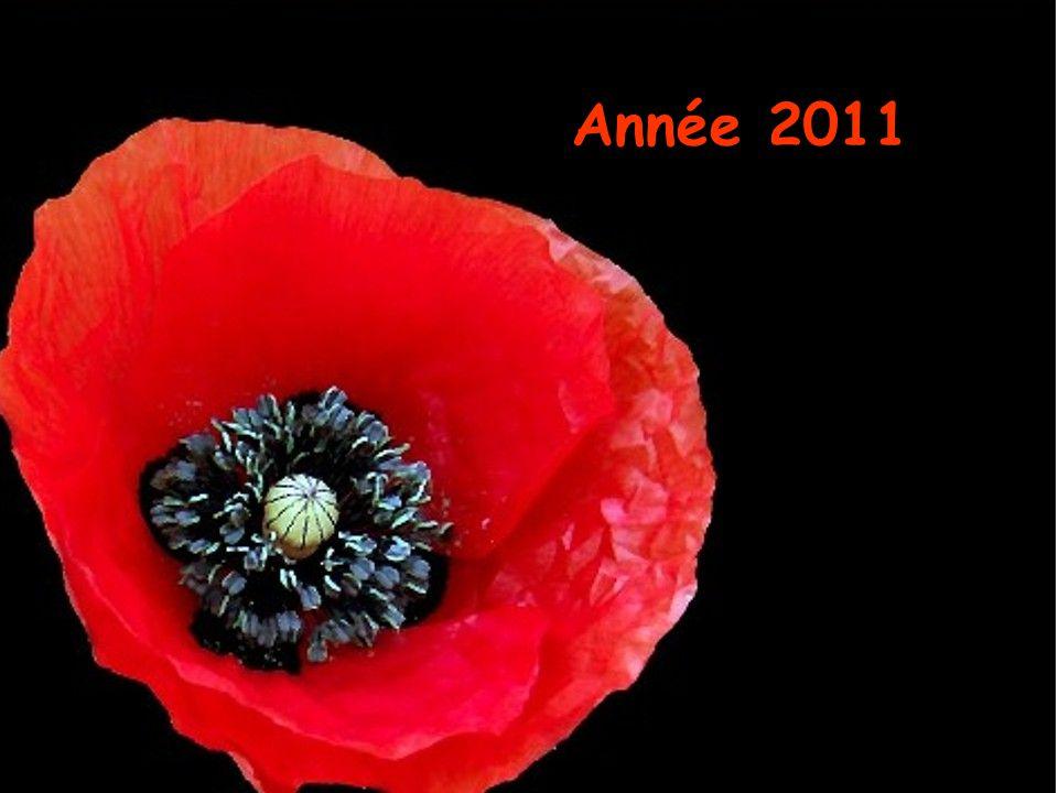 Pensées inoubliables Année 2011