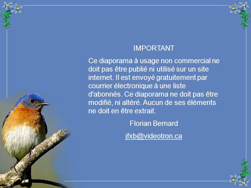 Serenity Mood Dan Gibson Nature Studio Création Florian Bernard Tous droits réservés – 2005 jfxb@videotron.ca