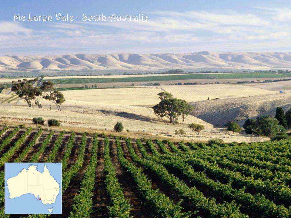 Mc Laren Vale - South Australia