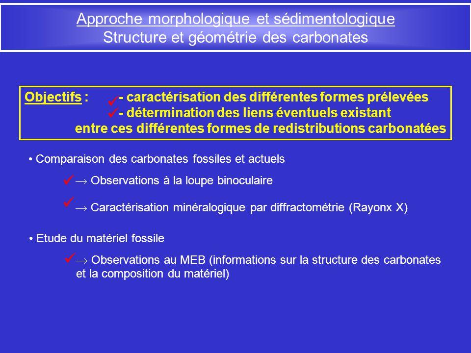Comparaison des carbonates fossiles et actuels Observations à la loupe binoculaire Caractérisation minéralogique par diffractométrie (Rayonx X) Approc