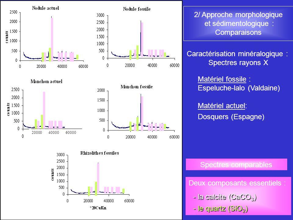 2/ Approche morphologique et sédimentologique : Comparaisons Matériel fossile : Espeluche-lalo (Valdaine) Matériel actuel: Dosquers (Espagne) Caractér
