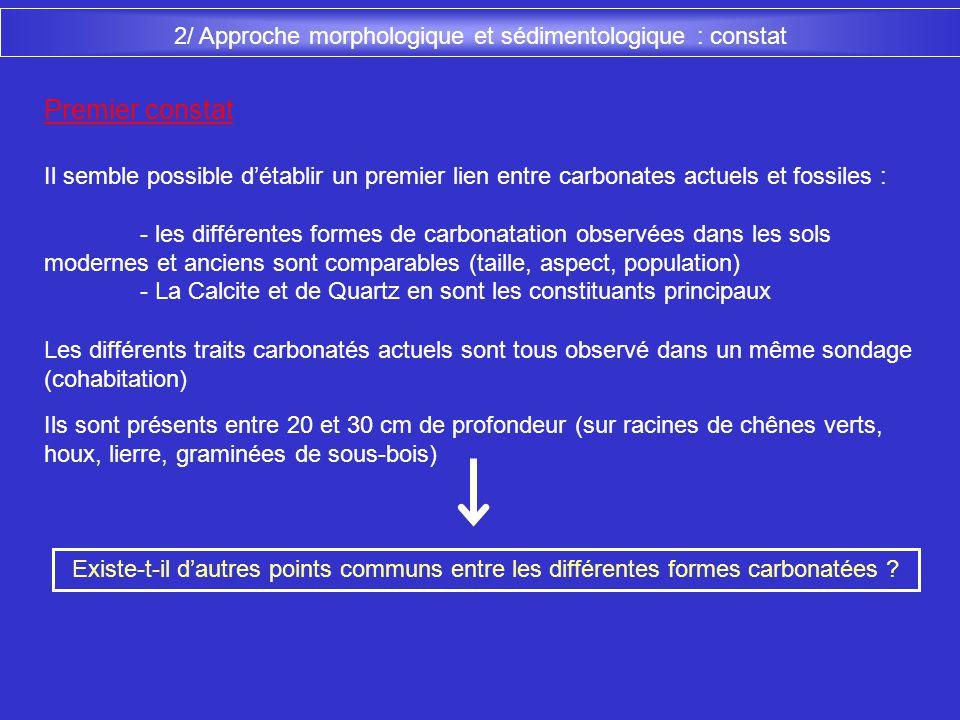 2/ Approche morphologique et sédimentologique : constat Il semble possible détablir un premier lien entre carbonates actuels et fossiles : - les diffé