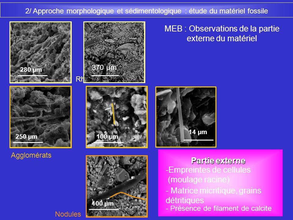 Agglomérats 14 µm MEB : Observations de la partie externe du matériel 250 µm Rhizolithes 280 µm Nodules 100 µm 2/ Approche morphologique et sédimentol