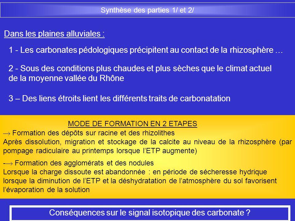 Dans les plaines alluviales : 1 - Les carbonates pédologiques précipitent au contact de la rhizosphère … 2 - Sous des conditions plus chaudes et plus