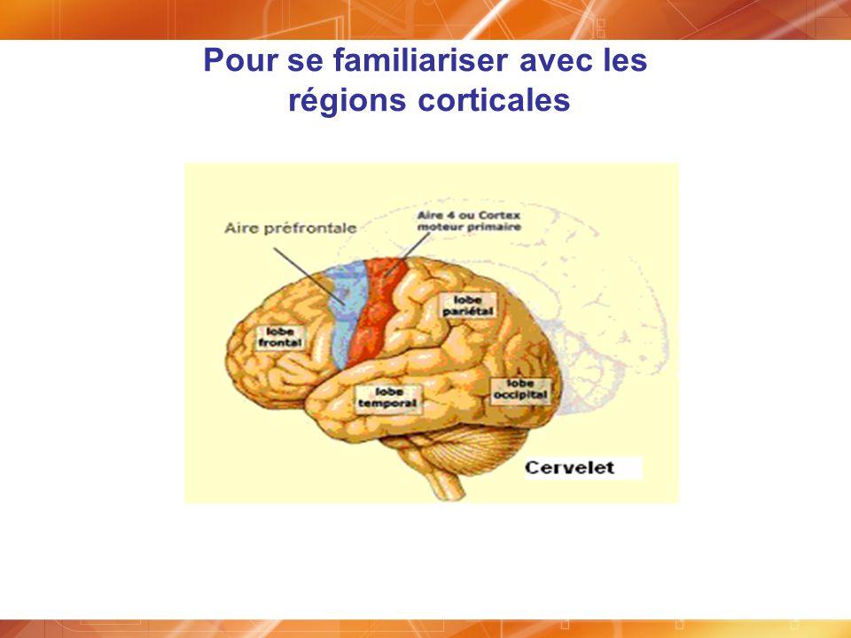 Pour se familiariser avec les régions corticales