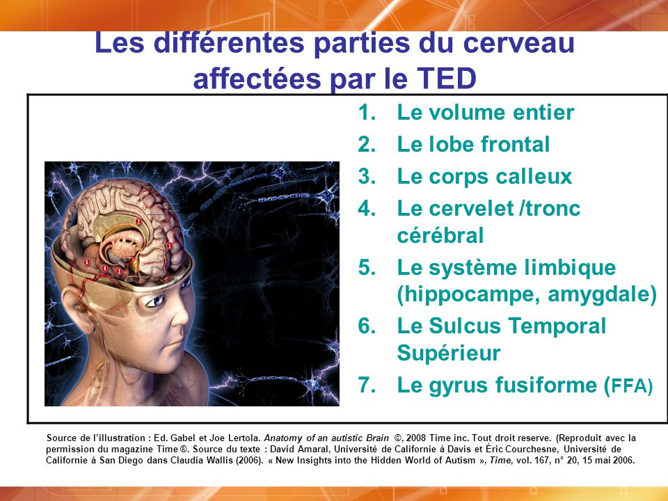 Les différentes parties du cerveau affectées par le TED 1.Le volume entier 2.Le lobe frontal 3.Le corps calleux 4.Le cervelet /tronc cérébral 5.Le sys
