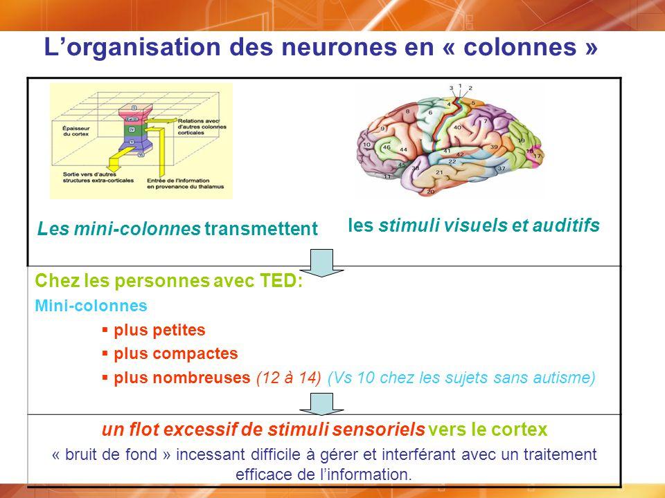 Lorganisation des neurones en « colonnes » Les mini-colonnes transmettent les stimuli visuels et auditifs Chez les personnes avec TED: Mini-colonnes p