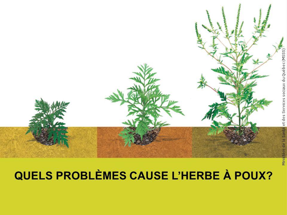 QUELS PROBLÈMES CAUSE LHERBE À POUX? Ministère de la Santé et des Services sociaux du Québec (MSSS)