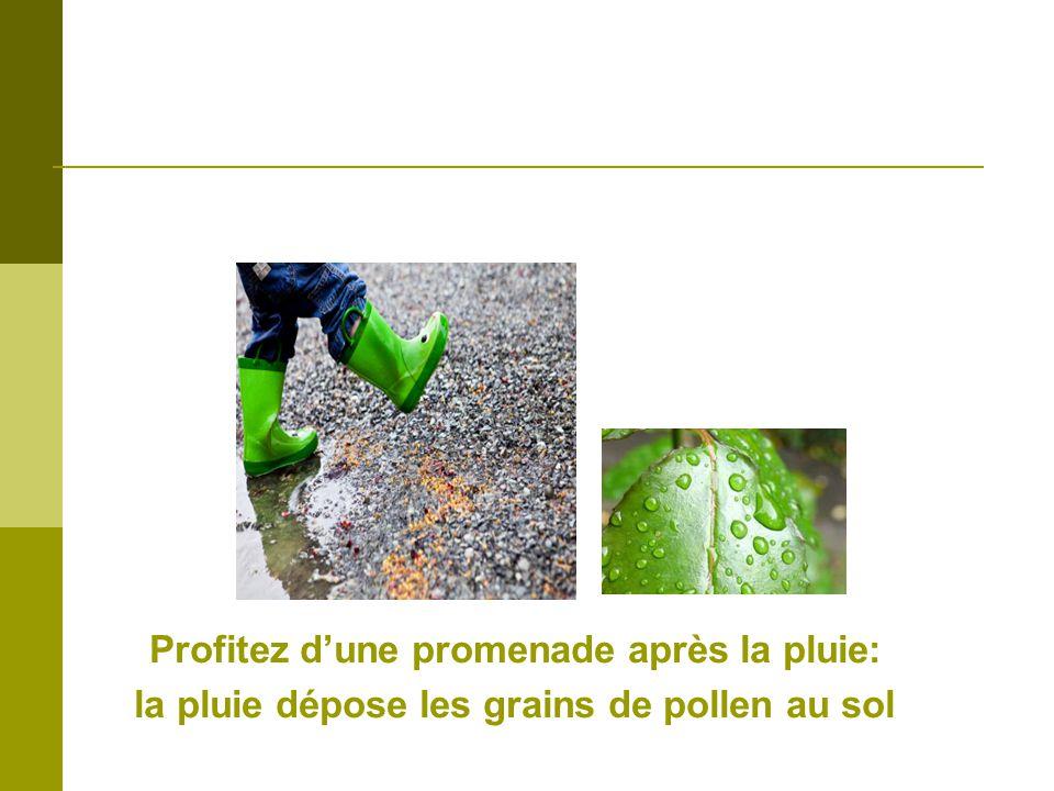Profitez dune promenade après la pluie: la pluie dépose les grains de pollen au sol