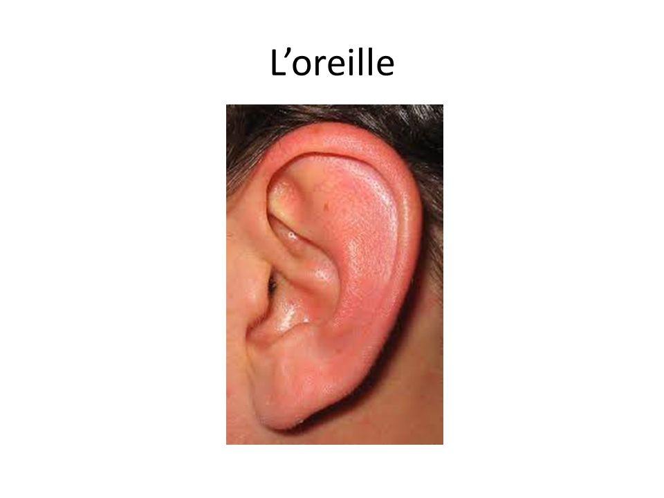 Loreille