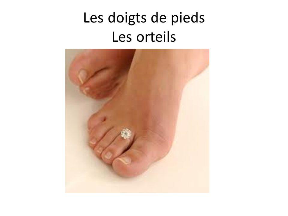 Les doigts de pieds Les orteils
