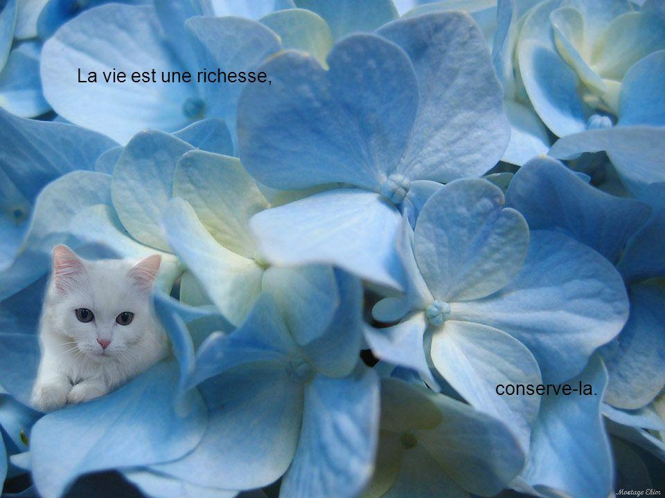La vie est précieuse, prends-en soin.