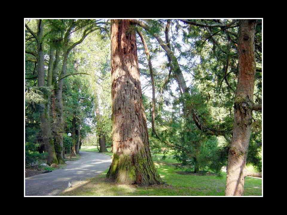 Lorsque les bûcherons s'approchèrent du troisième arbre, celui-ci fut effrayé, car il savait que si on le coupait, ses rêves de grandeur seraient rédu