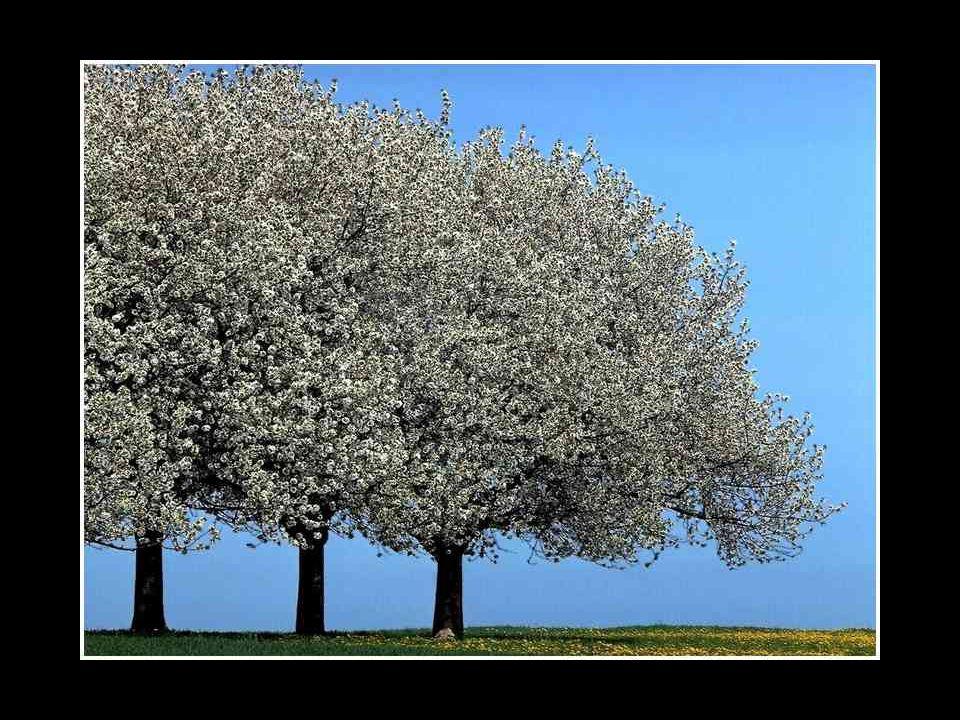 Enfin, quelqu'un alla chercher le troisième arbre oublié dans un coin; il fut transporté à travers les rues, et l'homme qui le portait se faisait insu